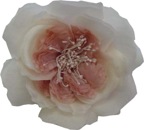 Tami Roses - shown in Old Rose